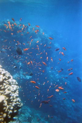 Pesci sulla barriera