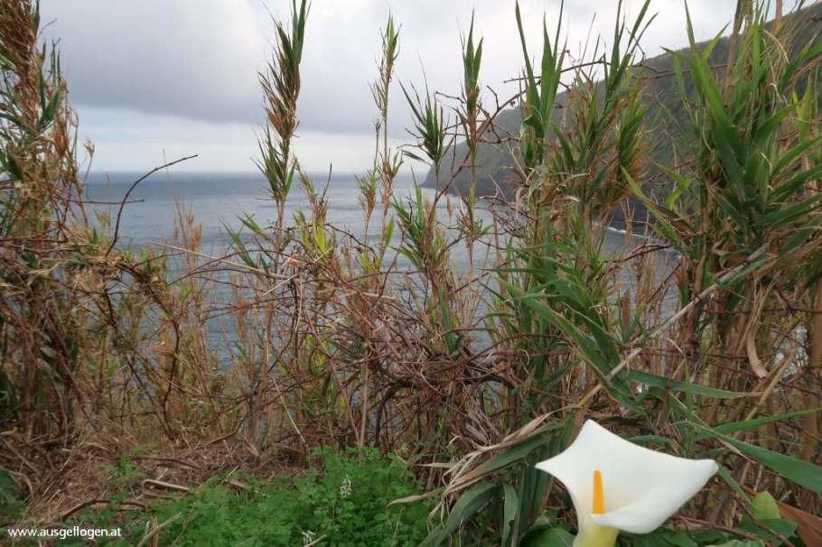 Blumen Azoren