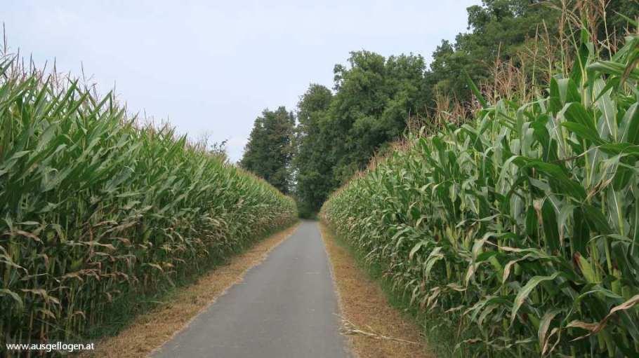 Kukuruzfelder Murradweg