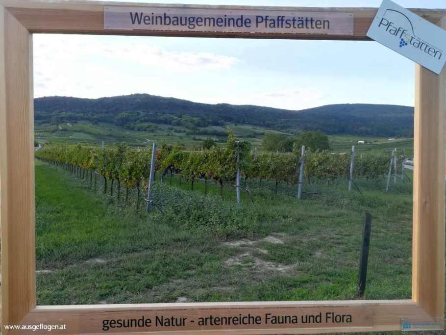 Pfaffstätten Weinbaugemeinde