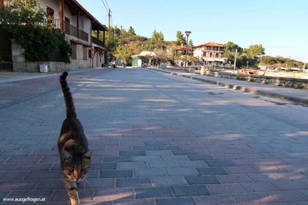 Griechenland streunde Katzen