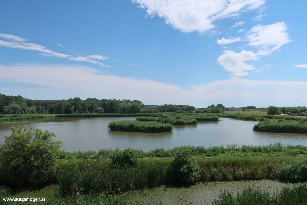 Vogelschauplätze Hohenau