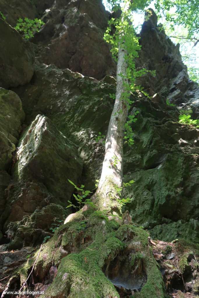 Hardegg Nationalpark Thayatal wandern