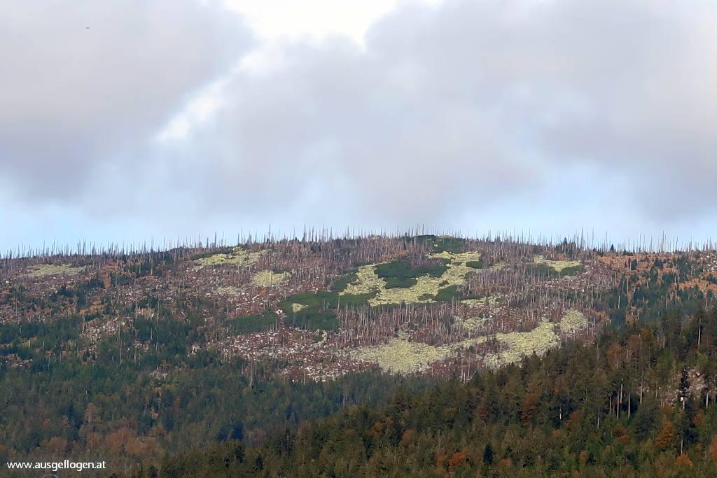 Dreisesselberg Böhmerwald Mühlviertel