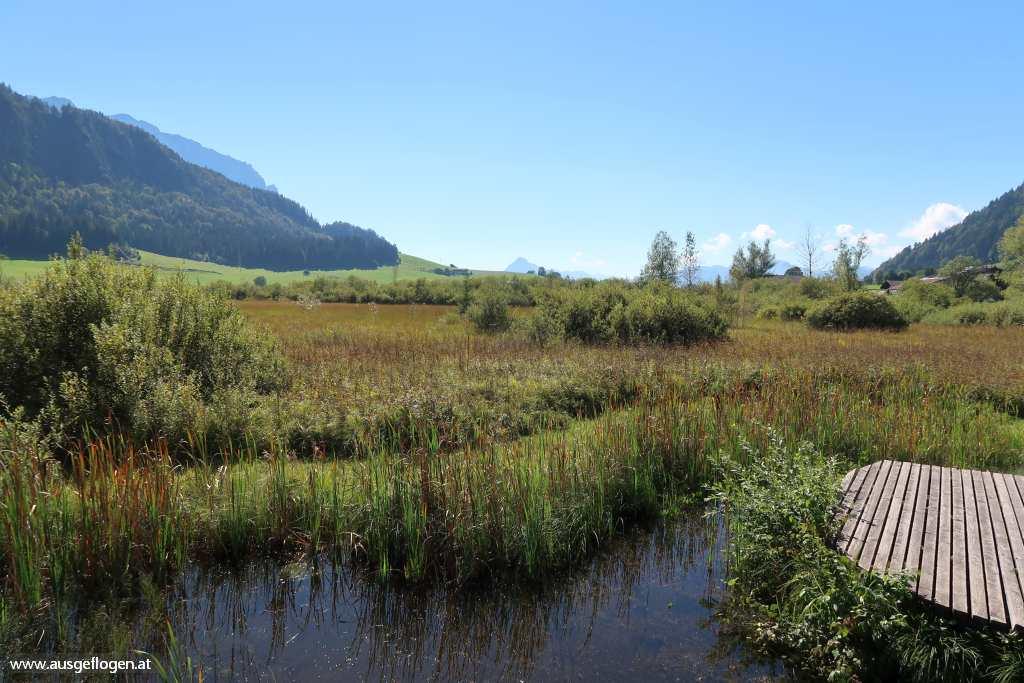 Kaiserwinkl Walchsee Moor Schwemm