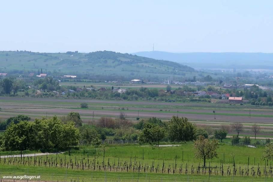 Kirschblütenradweg Blick auf Neusiedlersee