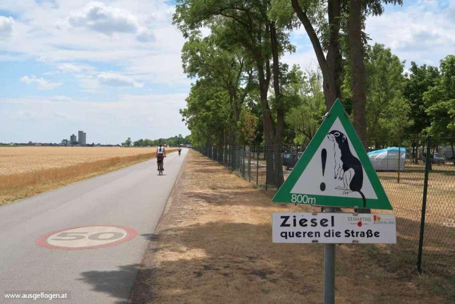 Zicksee Burgenland