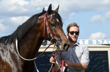 Land of Plenty and Strapper After Success In The Group One Toorak Handicap