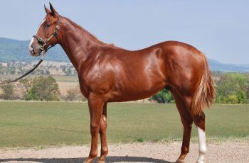 Lot 249 of the Inglis Classic Yearling Sale