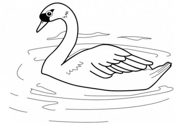 malvorlage schwan ausmalbild