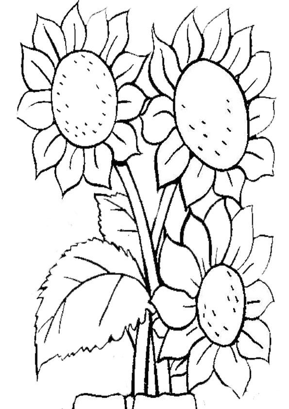 Ausmalbilder Blumen 15 Ausmalbilder Malvorlagen