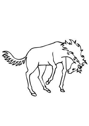 Ausmalbilder Braunes Wildpferd Pferde Malvorlagen