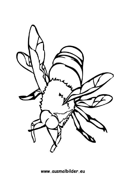 Ausmalbilder Biene Bienen Malvorlagen