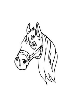 Ausmalbilder Kopf Von Pferd Pferde Malvorlagen