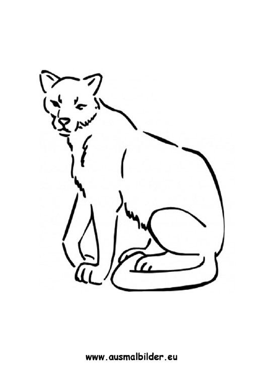 Ausmalbilder Puma Pumas Malvorlagen