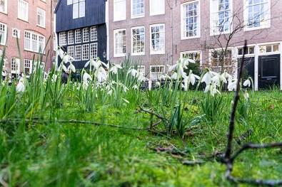 Begijnhof im Frühling