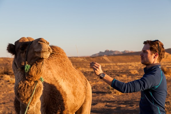 Kamel in der Erg Chebbi