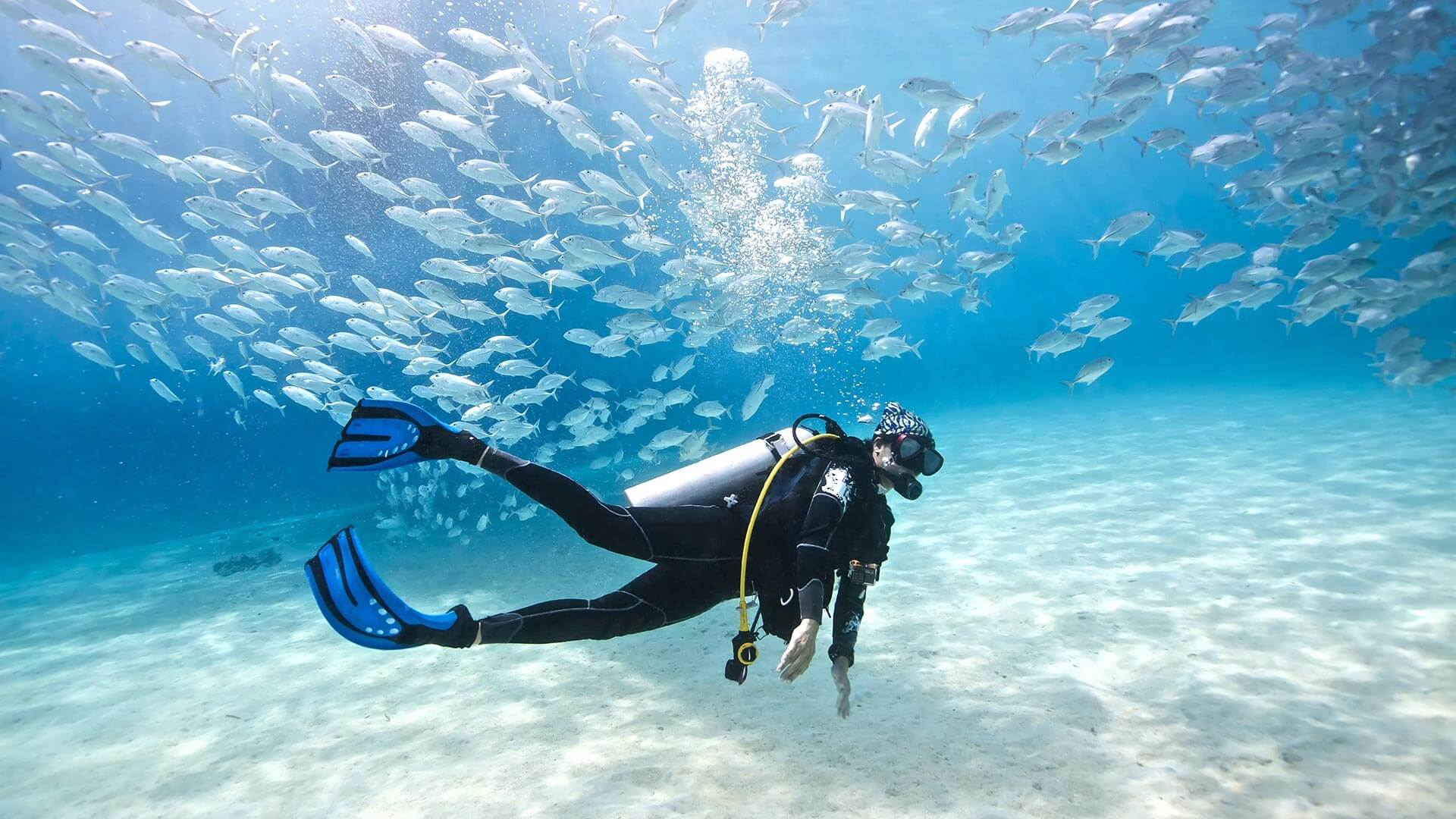Image results for scuba diving