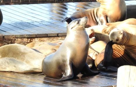 So cute Sea Lion