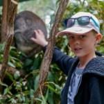 Cute Koalas at Australia Zoo