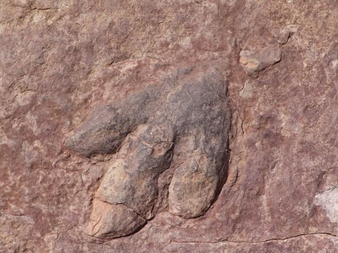 Dinosaurs, fossils,