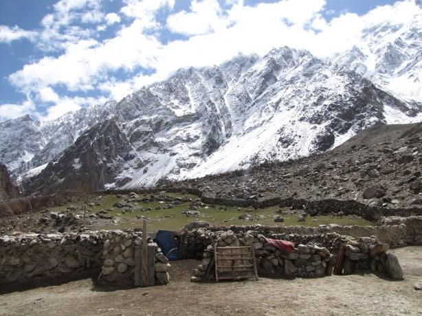 nomad goats