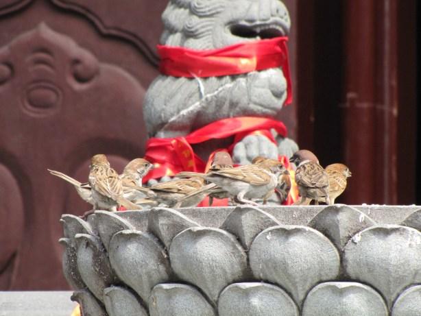 Birds bathing at the Jade Buddha Temple