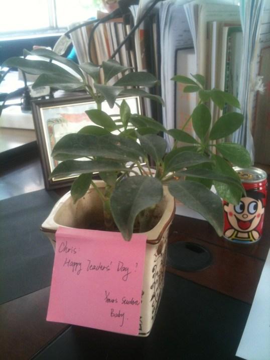 Gift pot plant