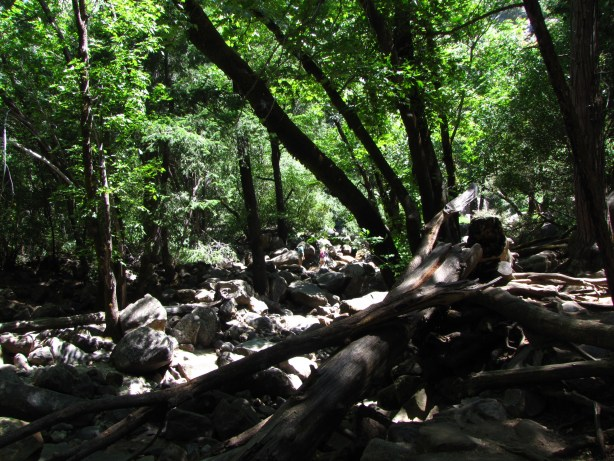 The walk to Bridalveil Falls