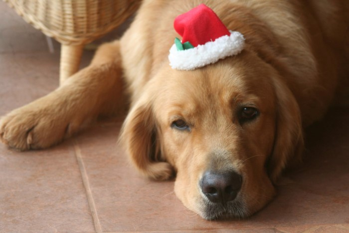 reasons-to-house-sit-christmas-4