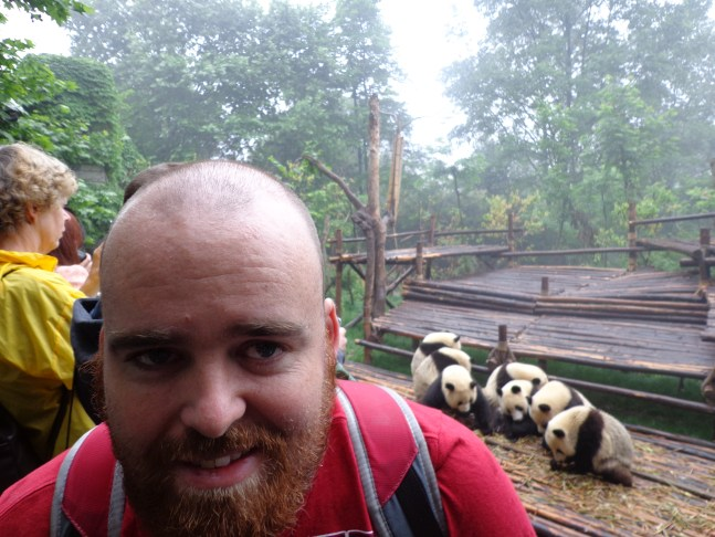 A very hungover Aussie on the Road with the pandas in Chengdu.