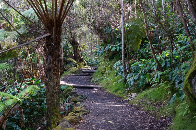 volcanoes national park hawaii hiking rainforest