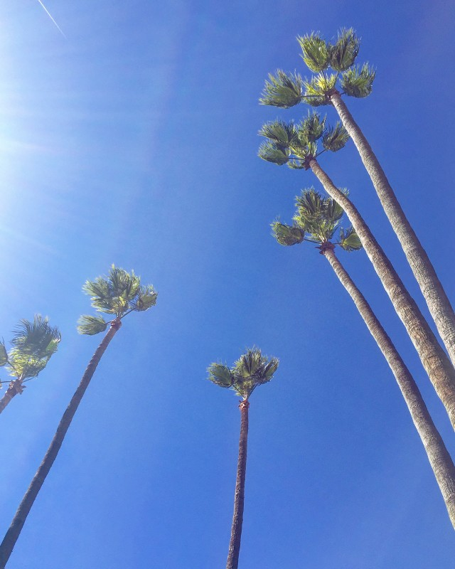 california palm trees blue skies