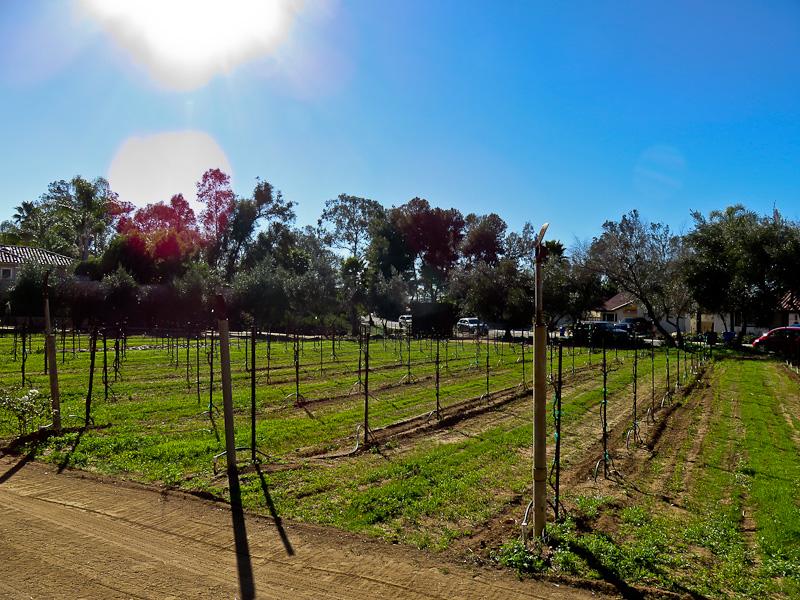 vineyard bernardo san diego