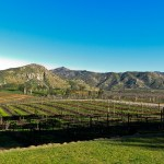 Getting Drunk in the Sun on a San Diego Wine Tour