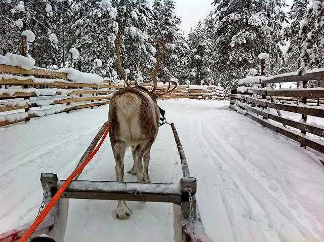 reindeer lapland christmas village