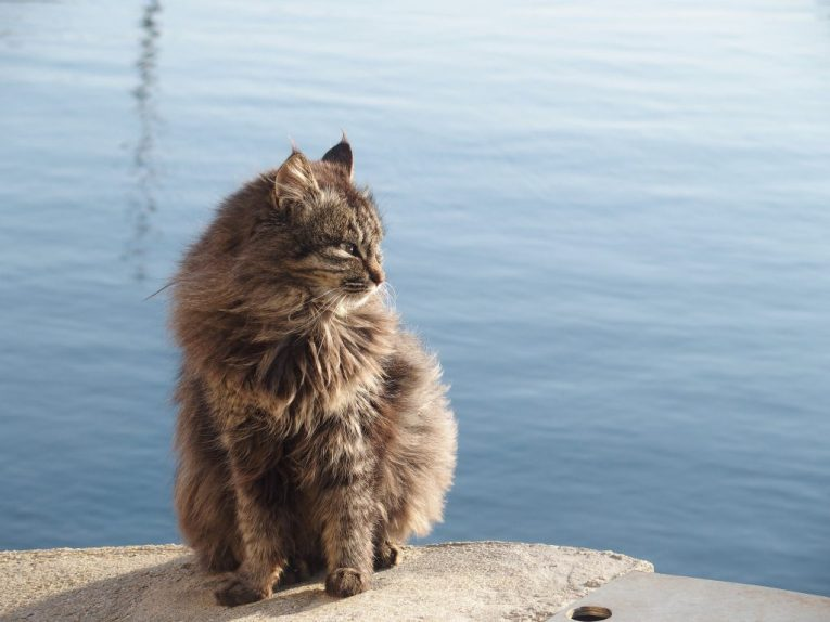42 - Cat Island Japan