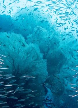 raja ampat scuba diving indonesia