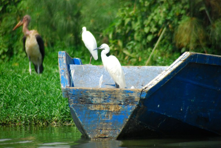 lake victoria birding