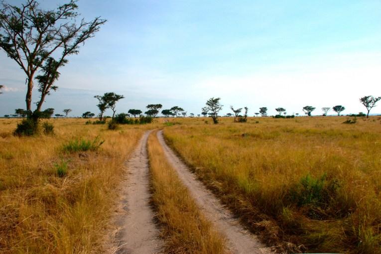 ishasha uganda queen elizabeth safari