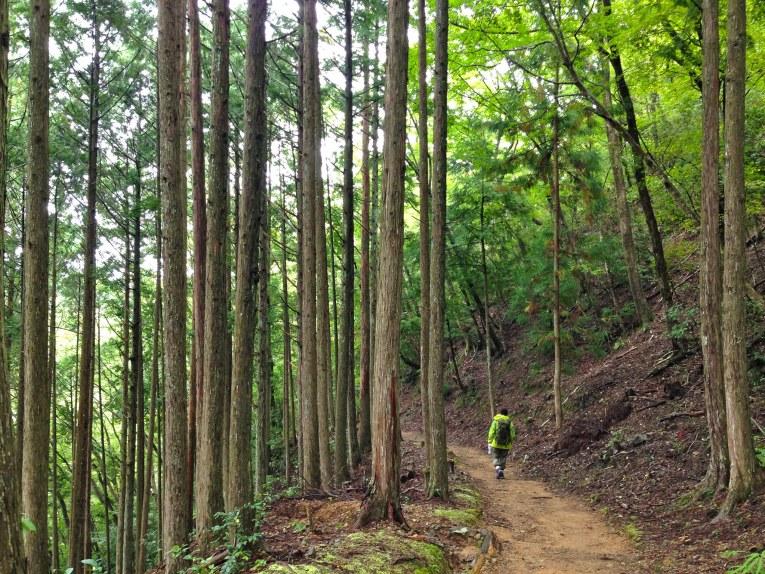 hiking the kumano kodo