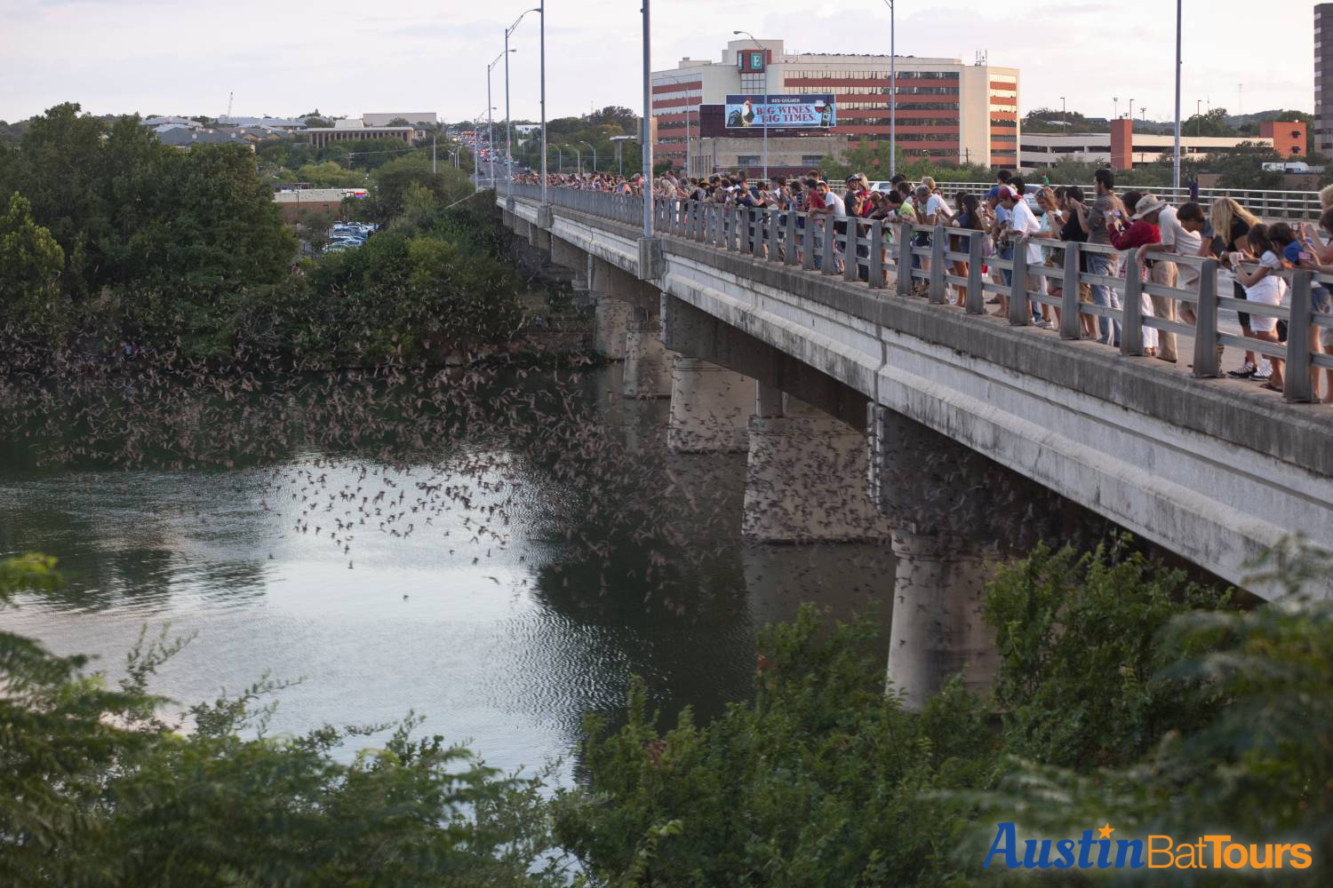 Austin's famous colony of mexican freetail bats fly out of the Ann W. Richards Congress Avenue Bridge