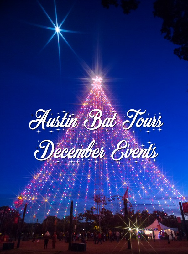 Festive Christmas Things to Do in Austin in December | Austin Bat Tours December Events
