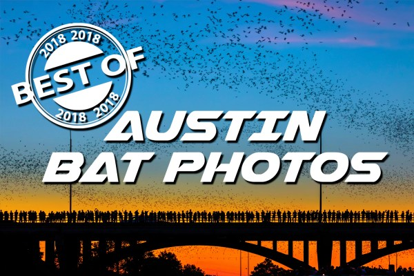 the most spectacular sunset of the year! congress bridge bats