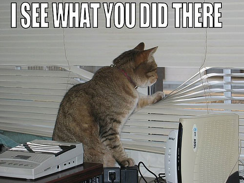 I-See-What-You-Did-There Cat sees what youre doing...