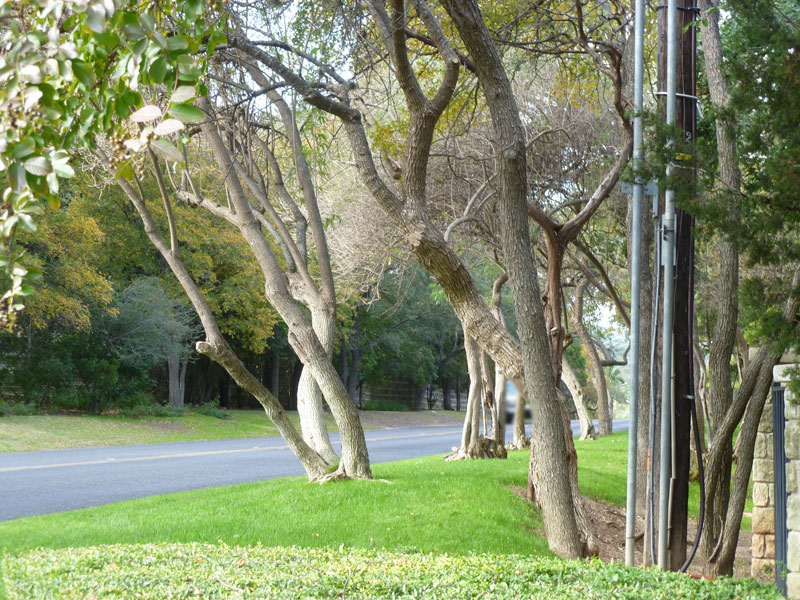 Tree Lined Stratford Hills Streets