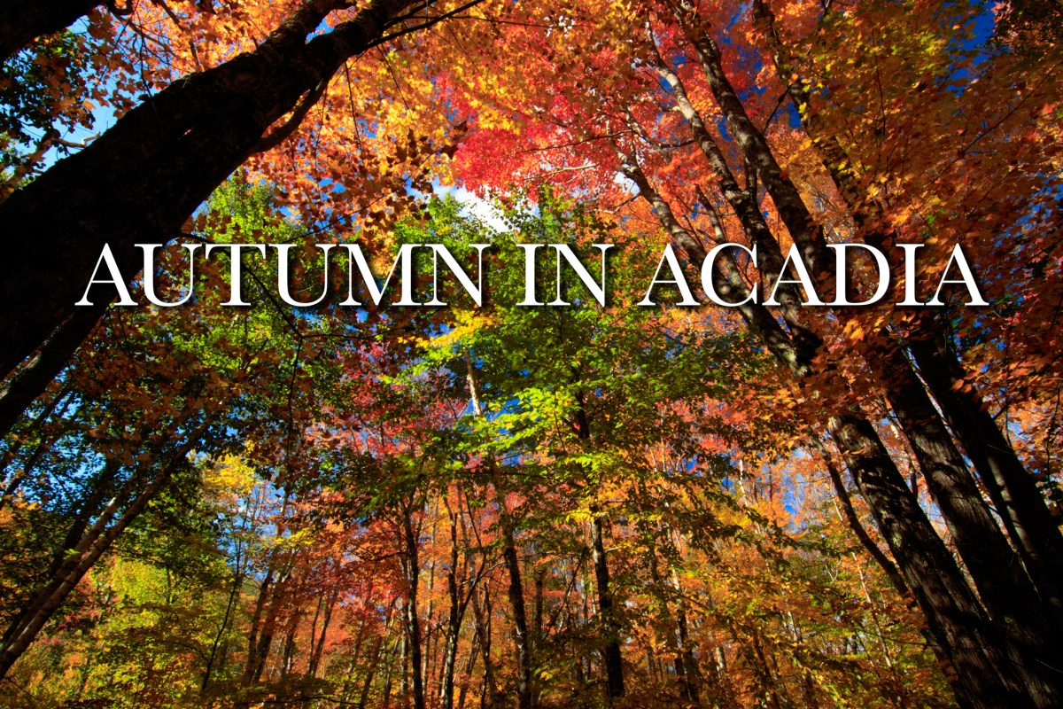 Time-Lapse Film: Autumn in Acadia