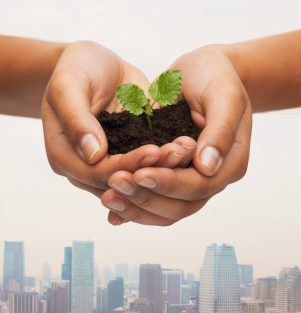 Learn entrepreneurship and urban agriculture