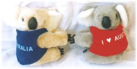 koalas - popular Australian souvenir