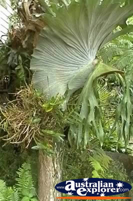 Elkhorn And Staghorn Ferns Photograph Elkhorn And